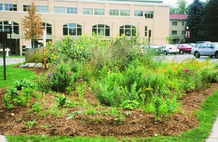 Urban Rain Garden